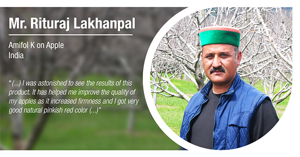 Mr. Rituraj Lakhanpal, from India, has tested Amifol K in Royal Delicious apples