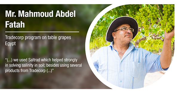 Mr. Mahmoud Abdel Fatah, from Egypt, has tested Tradecorp program in table grapes