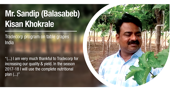 Mr. Sandip (Balasabeb) Kisan Khokrale, from India, has tested Tradecorp program in table grapes