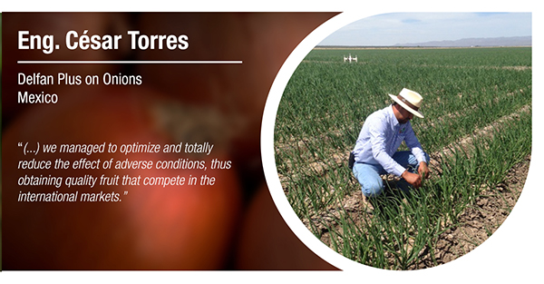 Eng. César Torres tested Delfan Plus on onions - testimonial Tradecorp