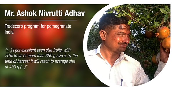 Testimonial Mr. Ashok Nivrutti Adhav - pomegranate - India