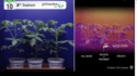 Drought stress affects plants earlier than you think. Watch it on this new infrared timelapse video !