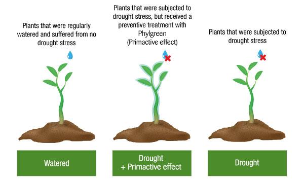 Plants primactive