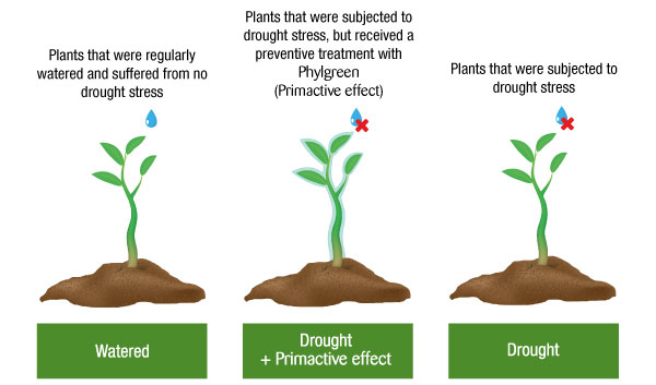 Plantas sequía Primactive