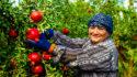 Día Internacional de la Mujer Rural: un tercio de la población mundial que reclama empoderamiento